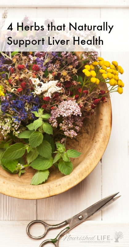 Learn about four herbal supplements to naturally support your liver health