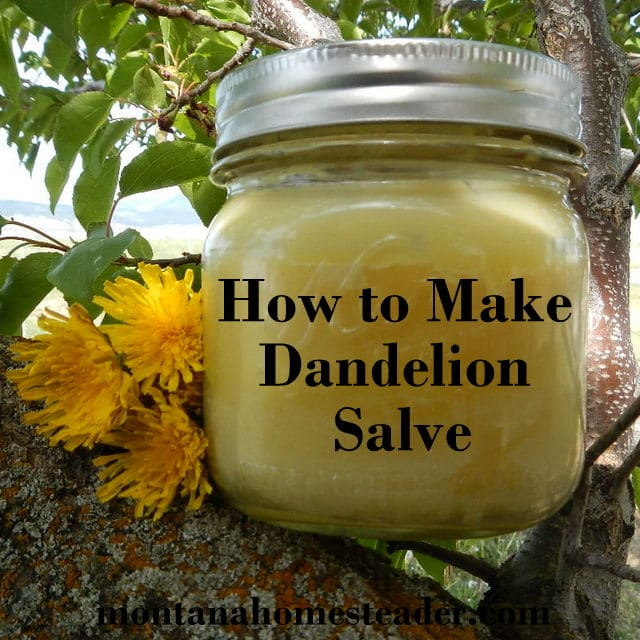 Coconut Oil Skincare Recipes: Dandelion Salve