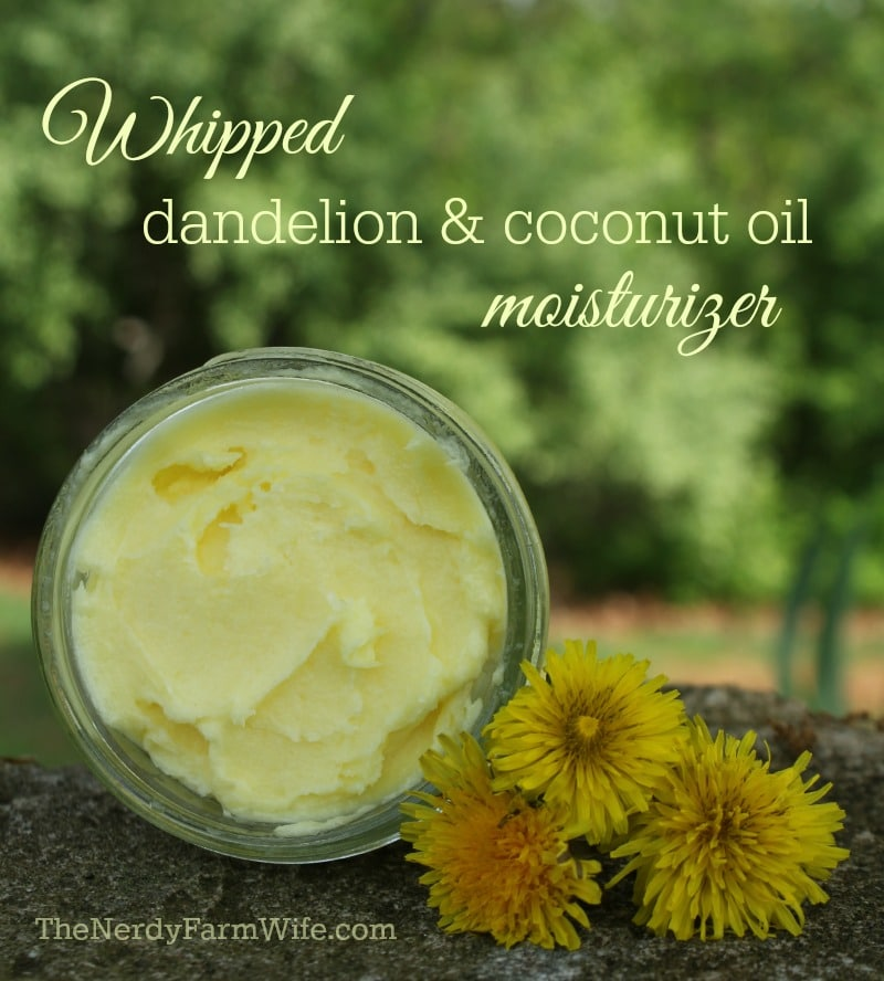 Coconut Oil for Skin: Whipped Dandelion and Coconut Oil Moisturizer surrounded by dandelion flowers