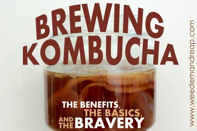 brew-kombucha